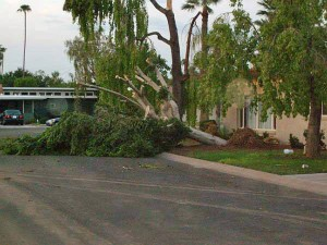 Tree Trimming in Phoenix | Avoid Damage from Branches | (480) 420-0902